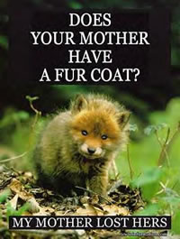 No fur